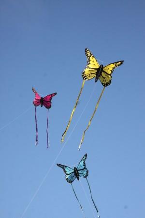 Wolkensturmer | Bella Butterfly Kite